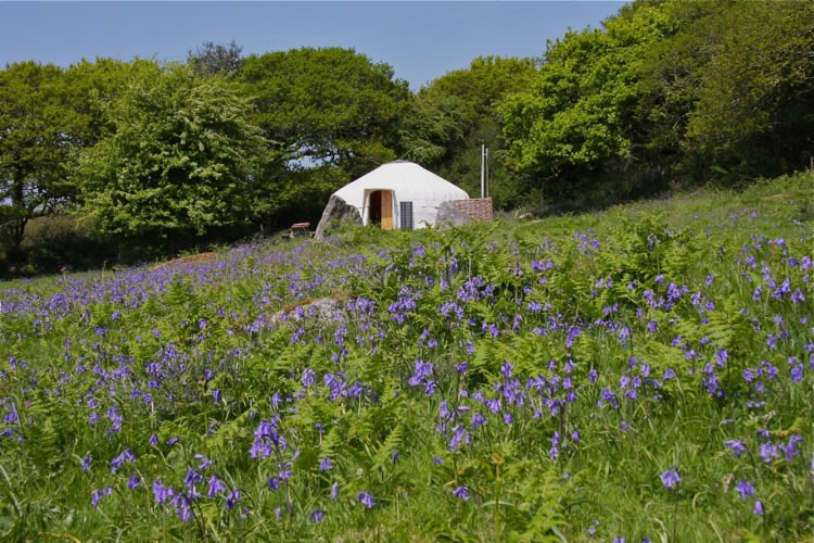 20ft Ash Field Yurt & Pod - Sleeps 6