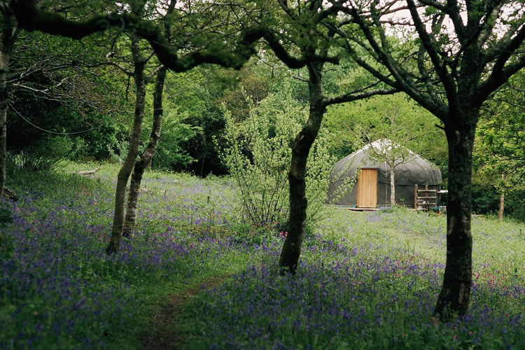 Take a break in one of our camping yurts