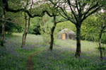 Our Bluebell Wood Yurt